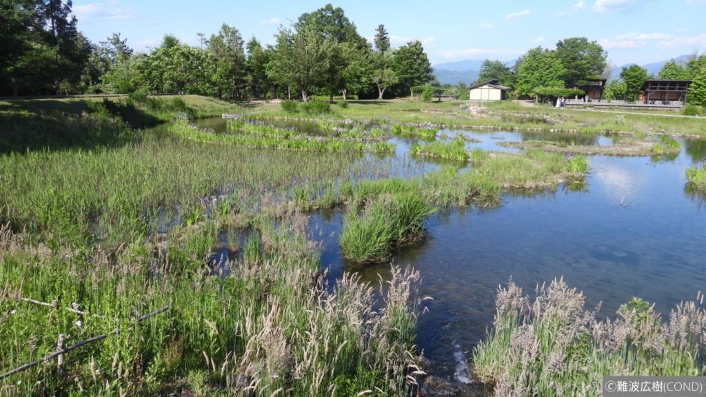 緑に囲まれた湿地帯