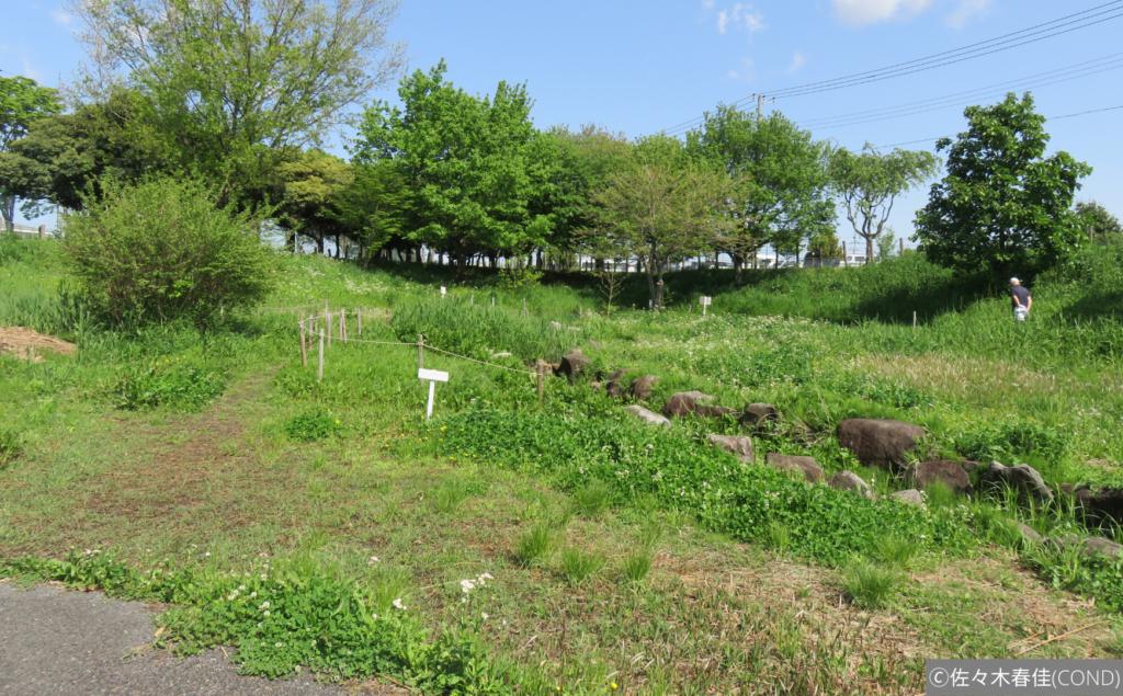 6月の原っぱと小川のビオトープ